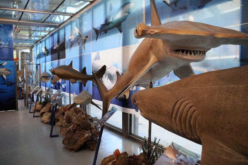 Museo di storia naturale risalente siti di incontri online gratis Russia